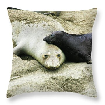 Throw Pillow featuring the photograph Mom And Pup by Anthony Jones