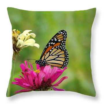 Monarch 10 Throw Pillow