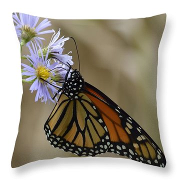 Monarch 2015 Throw Pillow by Randy Bodkins