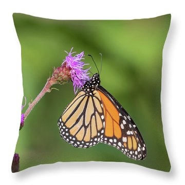 Monarch 2018-12 Throw Pillow