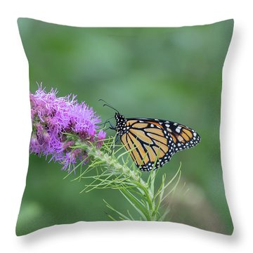 Monarch 2018-15 Throw Pillow