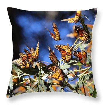 Monarch Active Cluster Throw Pillow