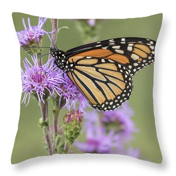 Monarch And Blazing Star 1-2015 Throw Pillow