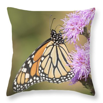 Monarch And Blazing Star 2-2015 Throw Pillow