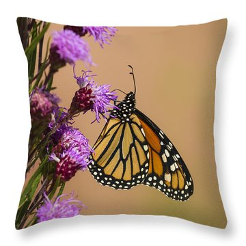 Monarch And Blazing Star 2013-1 Throw Pillow