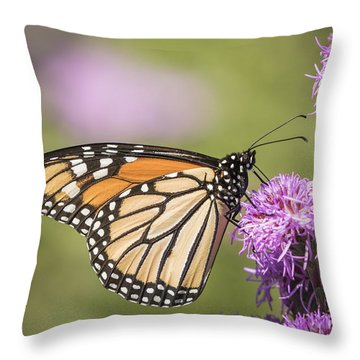 Monarch And Blazing Star 5-2015 Throw Pillow