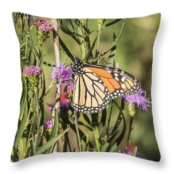 Monarch And Blazing Star 7-2015 Throw Pillow