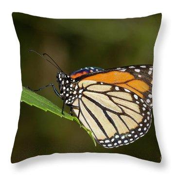Monarch Throw Pillow by Bryan Keil