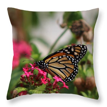 Monarch Butterfly On Fuchsia Throw Pillow