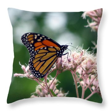Monarch Butterfly 1 Throw Pillow by George Jones