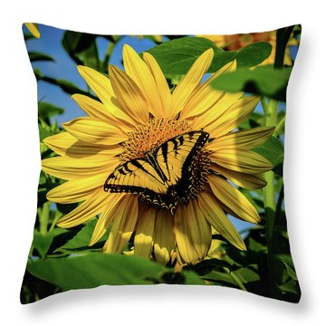 Male Eastern Tiger Swallowtail - Papilio Glaucus And Sunflower Throw Pillow