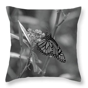 Monarch Butterfly-bw Throw Pillow