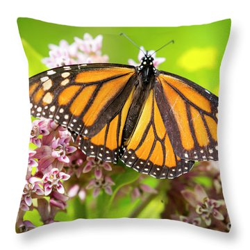 Throw Pillow featuring the photograph Monarch Butterfly Closeup  by Ricky L Jones