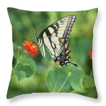 Monarch Butterfly Throw Pillow by Debra Crank