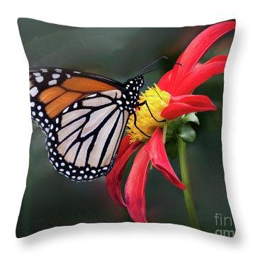 Monarch  Butterfly Enjoying A Dahlia Throw Pillow
