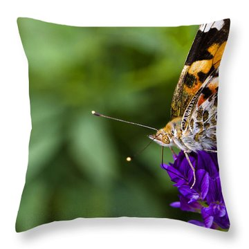 Monarch Butterfly Throw Pillow by Marlo Horne