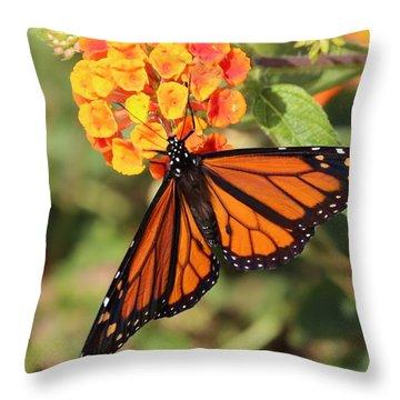 Monarch Butterfly On Orange Flower Throw Pillow