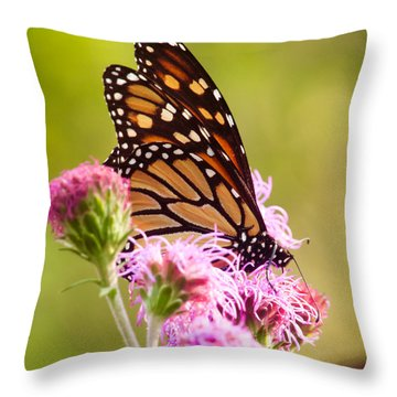 Throw Pillow featuring the photograph Monarch Butterfly Square by Heidi Hermes