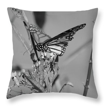 Monarch - Bw Throw Pillow