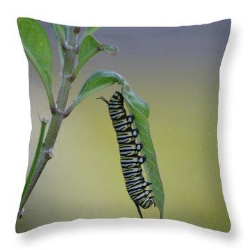Monarch Caterpillar Feeding Throw Pillow