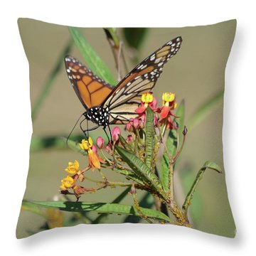 Monarch Feeding Throw Pillow
