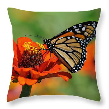 Monarch Glow Throw Pillow