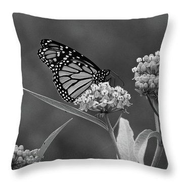 Monarch In Black And White Throw Pillow