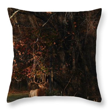 Throw Pillow featuring the photograph Monarch Joins The Rut by Michael Dougherty
