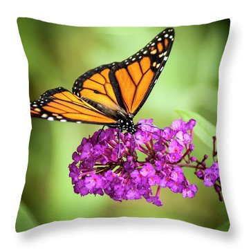 Monarch Moth On Buddleias Throw Pillow