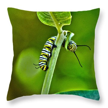 Monarch Munchies Throw Pillow