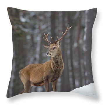 Monarch Of The Woods Throw Pillow