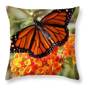Monarch On 2 Flowers Throw Pillow