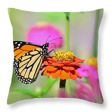 Throw Pillow featuring the photograph Monarch On A Zinnia by Rodney Campbell