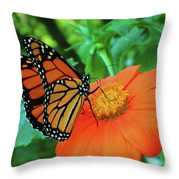 Monarch On Mexican Sunflower Throw Pillow