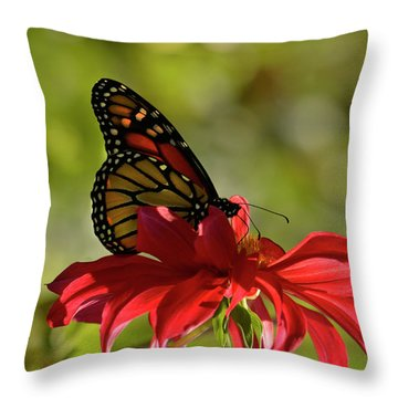Throw Pillow featuring the photograph Monarch On Red Zinnia by Ann Bridges