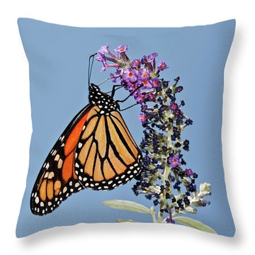 Throw Pillow featuring the photograph Monarch Orange And Blue by Lara Ellis