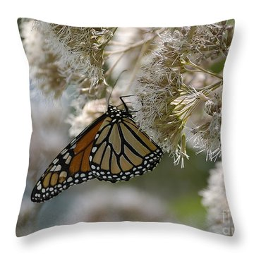 Monarch Pink Throw Pillow