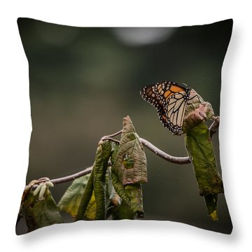 Monarch Throw Pillow by Ray Congrove