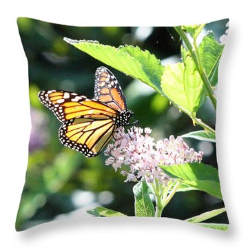 Monarch1 Throw Pillow