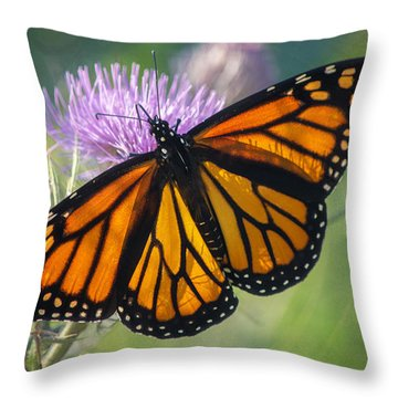 Monarch's Beauty Throw Pillow by Rima Biswas