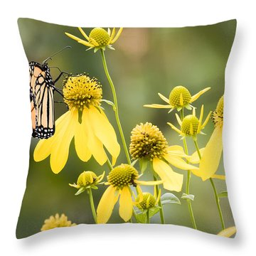 Monarchs Of Wisconsin Throw Pillow
