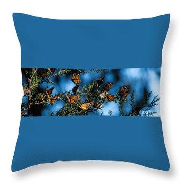 Monarchs Throw Pillow
