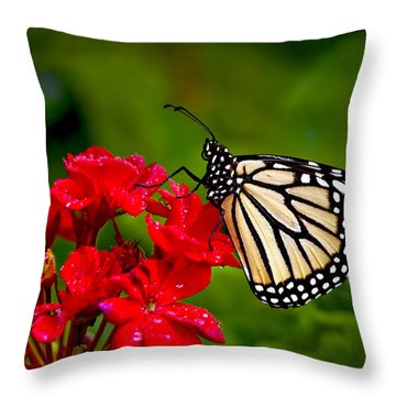 Monarh Butterfly Throw Pillow