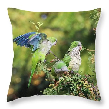 Throw Pillow featuring the photograph Monk Parakeets Feeding On Evergreens 2 by William Selander