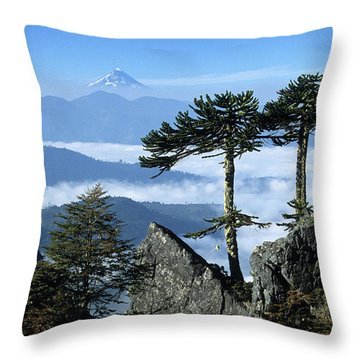 Monkey Puzzle Trees In Huerquehue National Park Throw Pillow by James Brunker