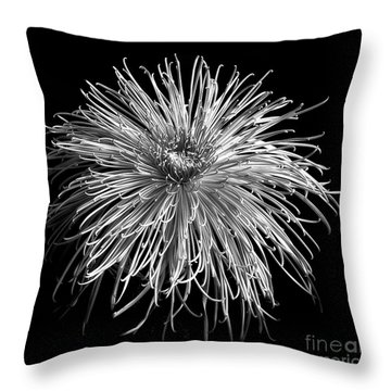 Throw Pillow featuring the photograph Monochrome Of Chrysanthemum 'pink Splendor' by Ann Jacobson