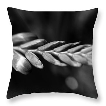 Montbretia  Throw Pillow