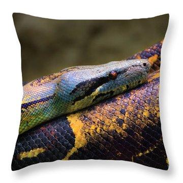 Don't Wear This Boa Throw Pillow by Al Bourassa