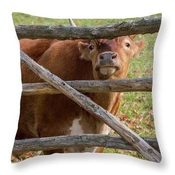 Throw Pillow featuring the photograph Moo by Bill Wakeley