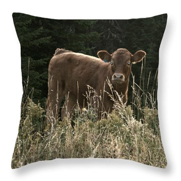MOO Throw Pillow by Tiffany Vest
